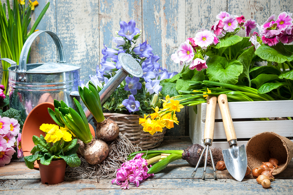 Fill your home with flowers for first day of spring